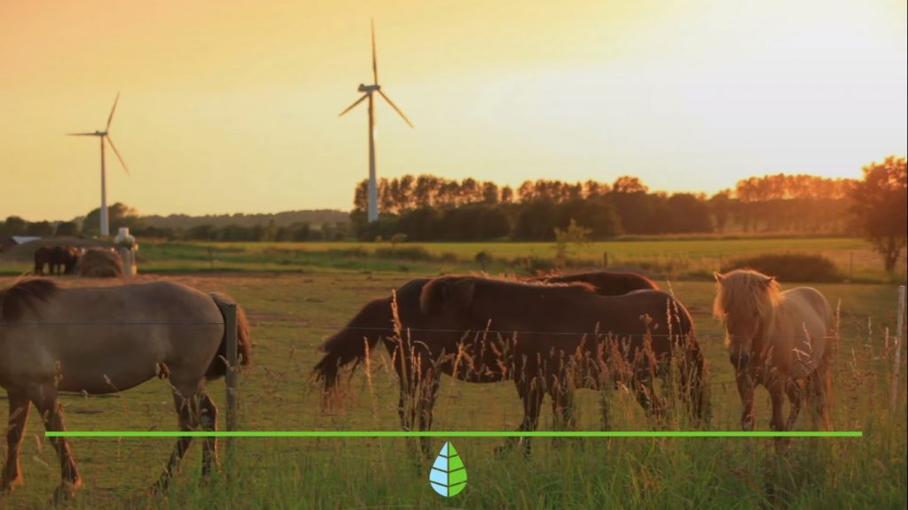 Energía eólica , la energía del viento