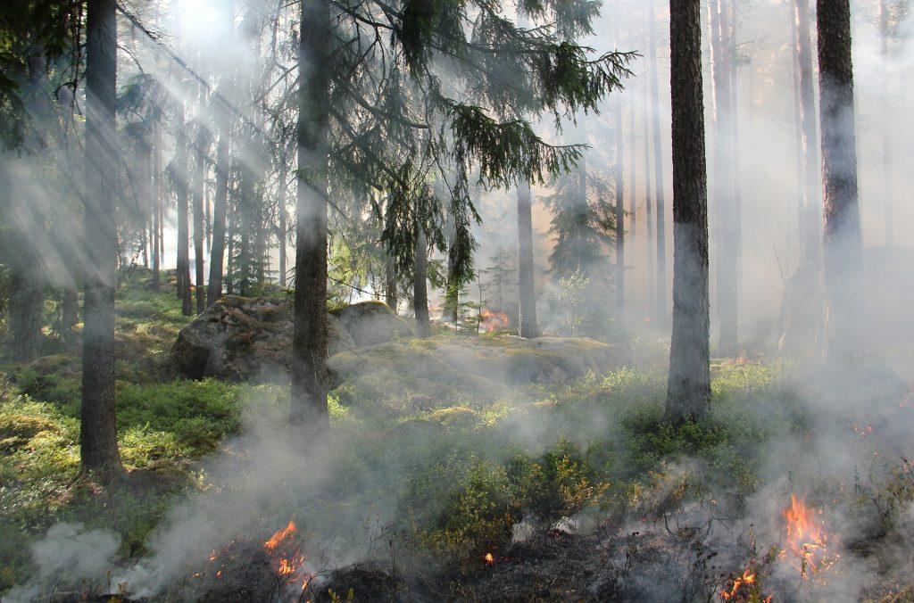 que es un incendio forestal