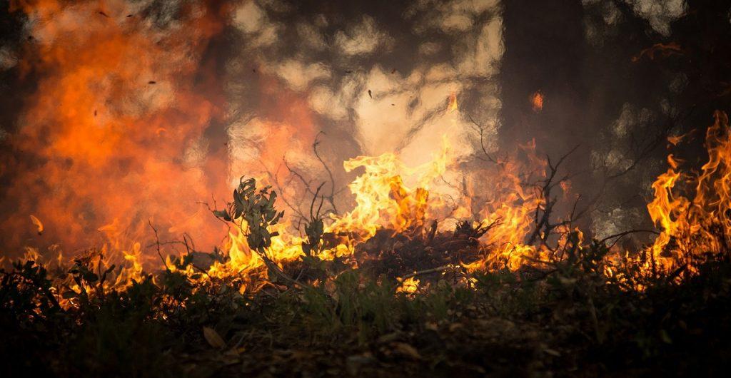 Que son incendios forestales