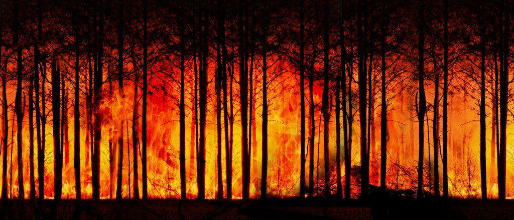 incendios forestales arrasan siberia