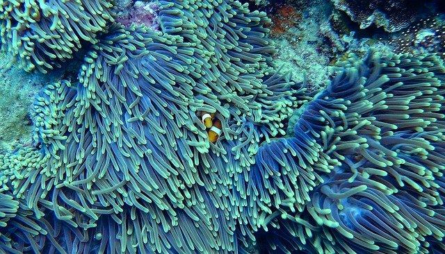 Efectos sobre los corales