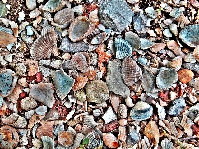 el deterioro de la concha del crustáceo