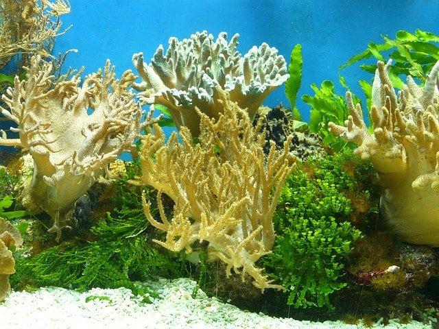 peligroso para los corales