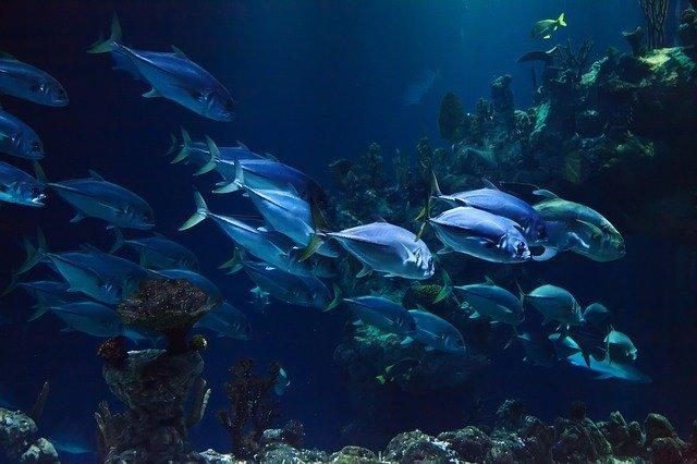Los peces ingieren plásticos