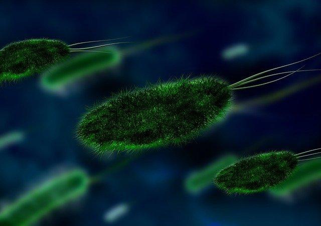 proyecto microbioma humano