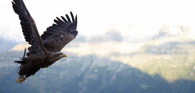 Zonas de especial proteccion de aves ZEPA