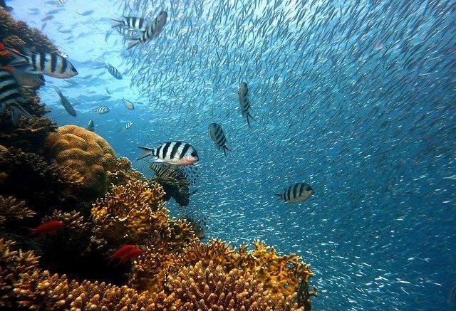 la salinidad en los ecosistemas acuaticos