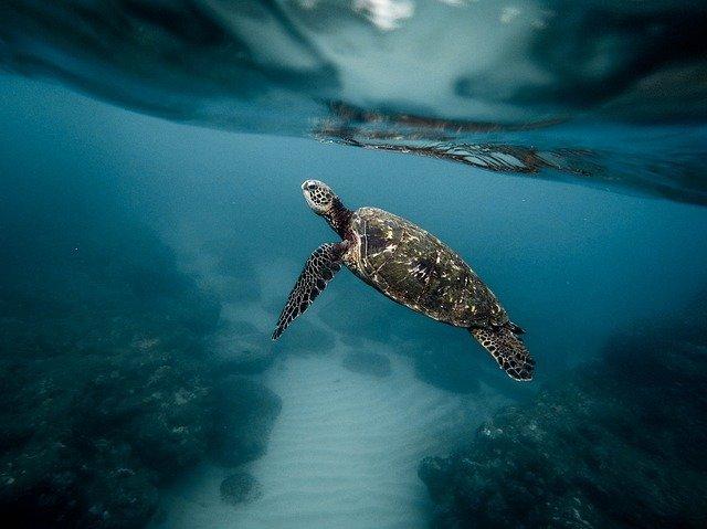 animales del fondo del mar