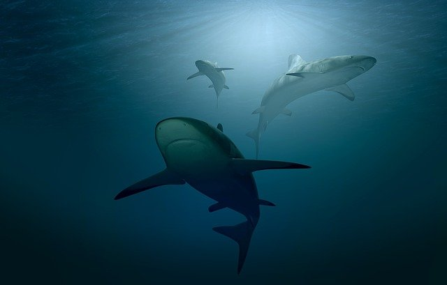 la biosfera marina