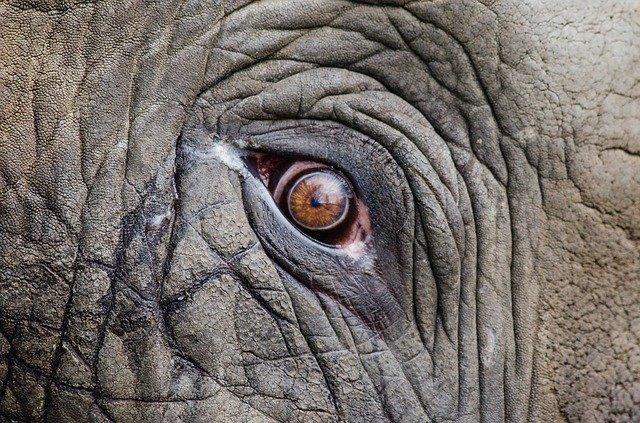 caza ilegal de elefantes