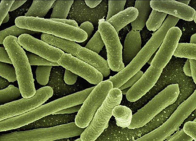 control de bacterias patogenas