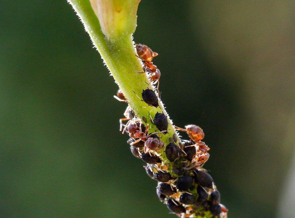 opciones de contol de insectos