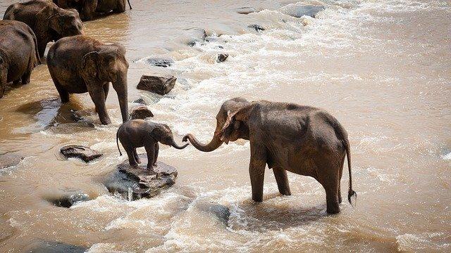 protección de los elefantes