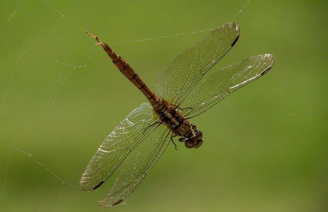 trampas de insectos
