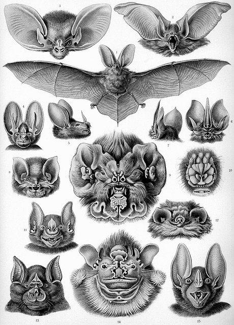 El término ecología por Haeckel